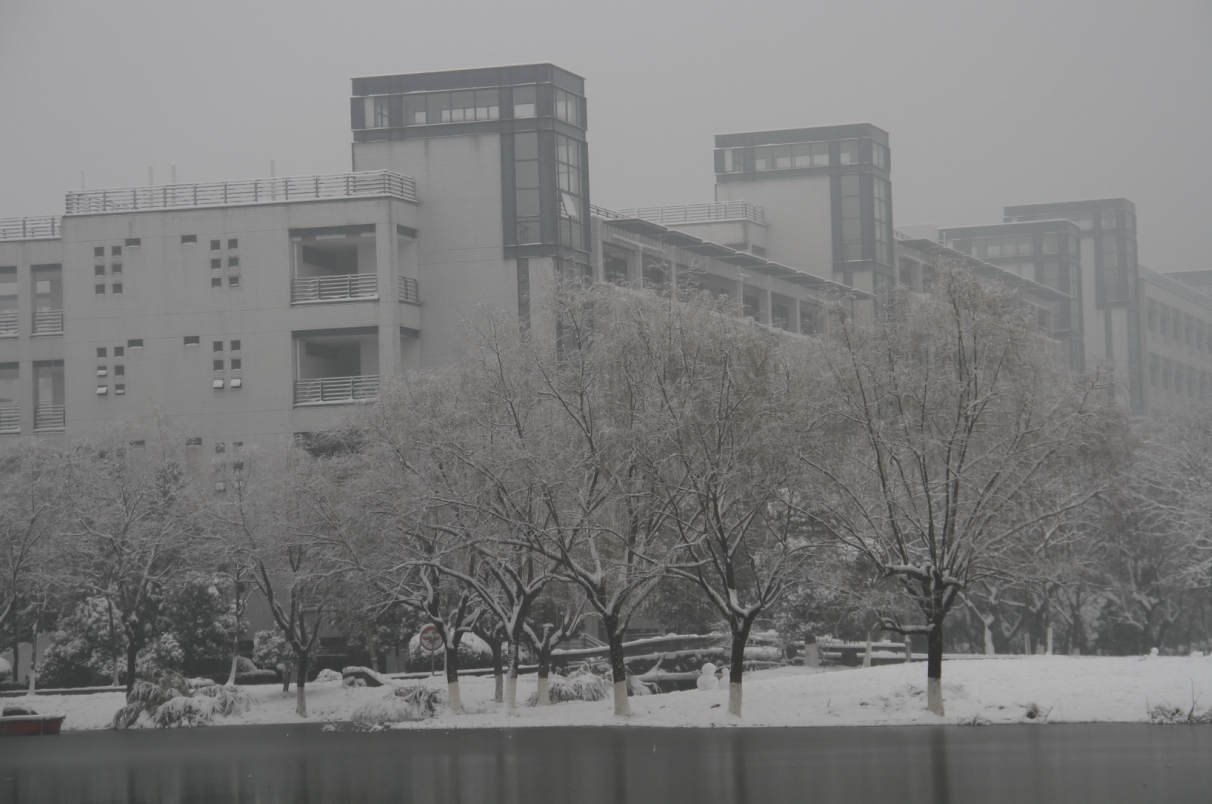 Lab in the winter